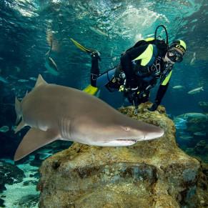 Experiencias con delfines tiburones y leones marinos for Acuario valencia precio